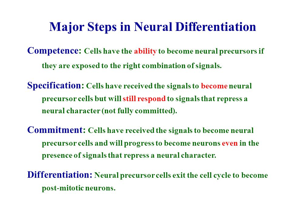 Major Steps in Neural Differentiation