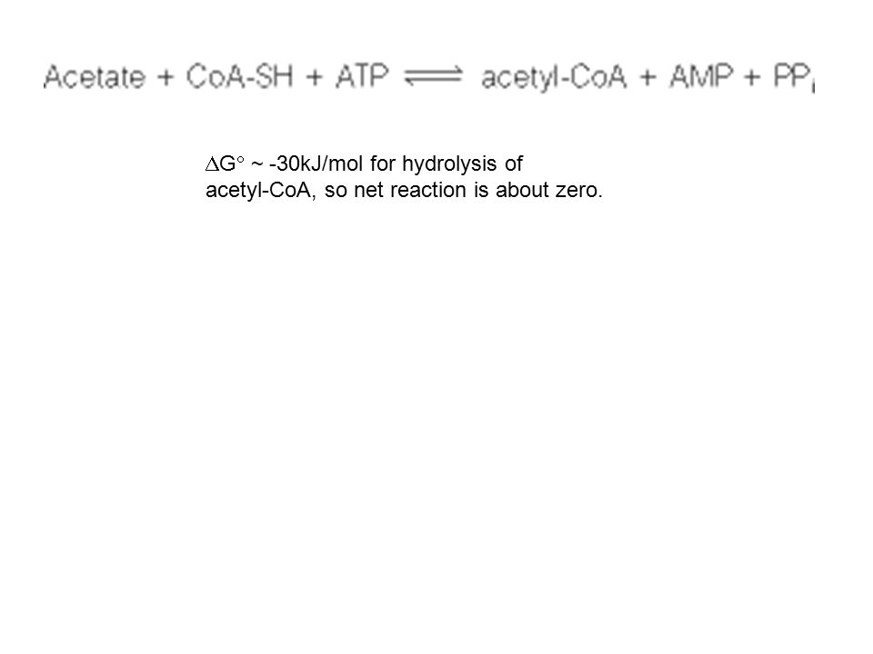 G ~ -30kJ/mol for hydrolysis of