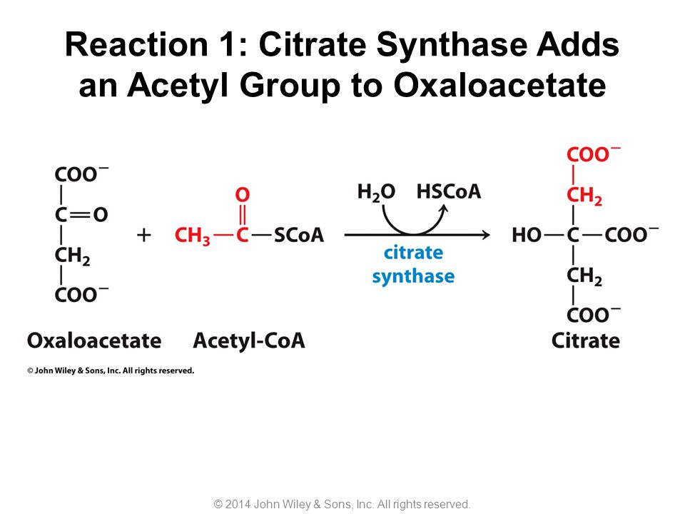 Reaction 1: Citrate Synthase Adds an Acetyl Group to Oxaloacetate