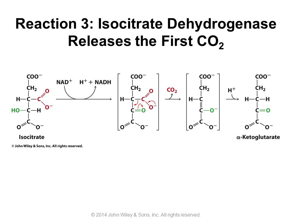 Reaction 3: Isocitrate Dehydrogenase Releases the First CO2