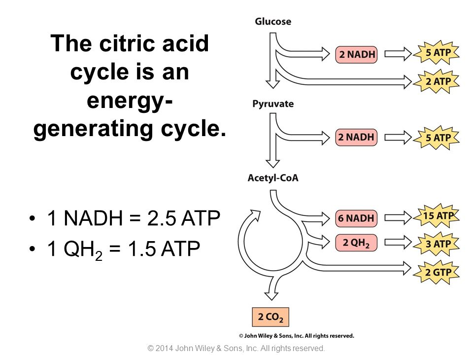 The citric acid cycle is an energy-generating cycle.