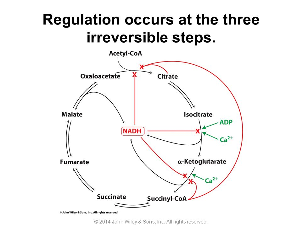 Regulation occurs at the three irreversible steps.