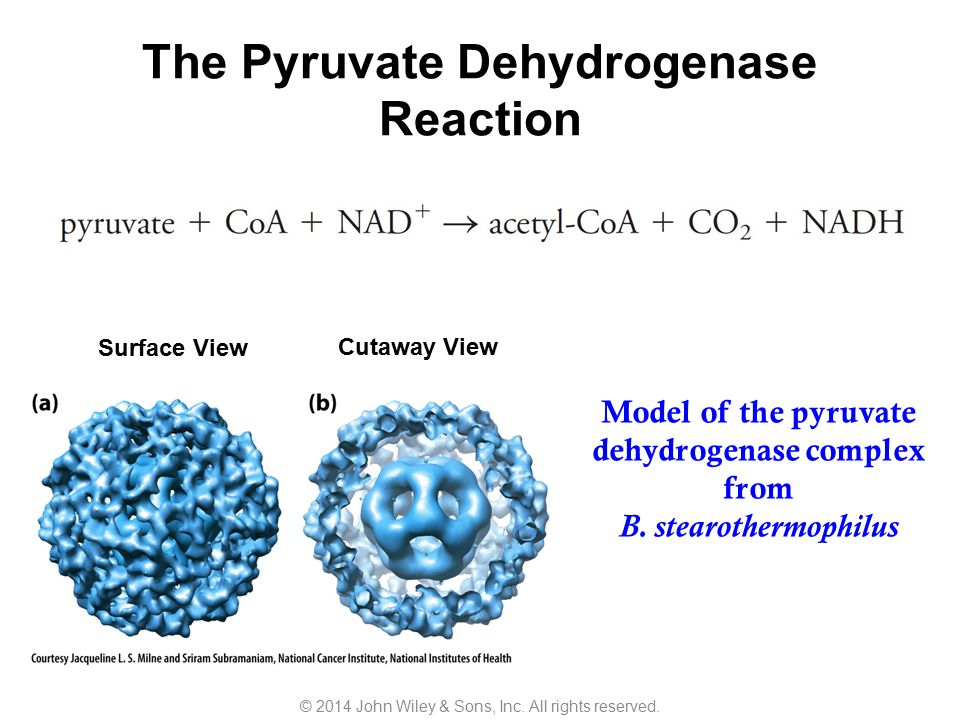 The Pyruvate Dehydrogenase Reaction
