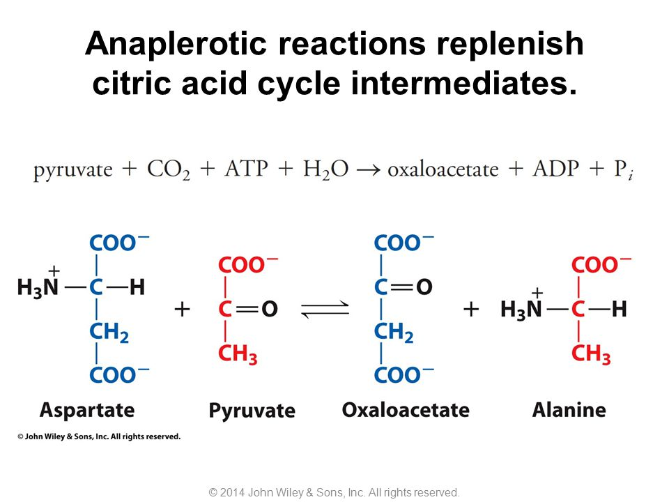 Anaplerotic reactions replenish citric acid cycle intermediates.