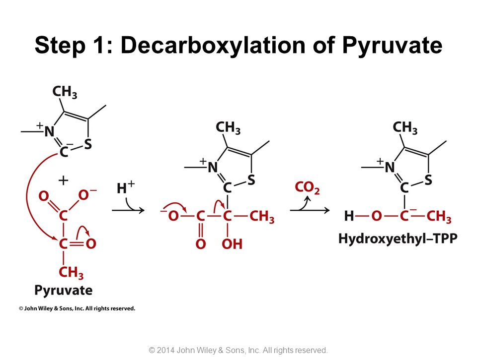 Step 1: Decarboxylation of Pyruvate