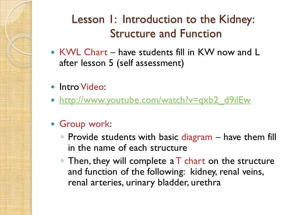 Lesson 1: Introduction to the Kidney: Structure and Function