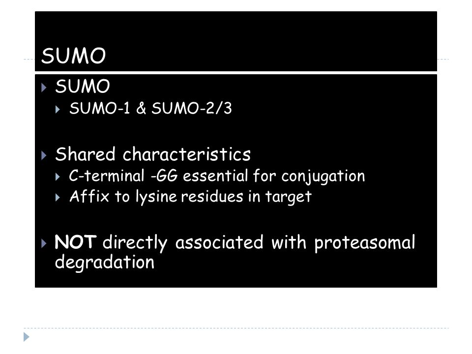 SUMO SUMO Shared characteristics