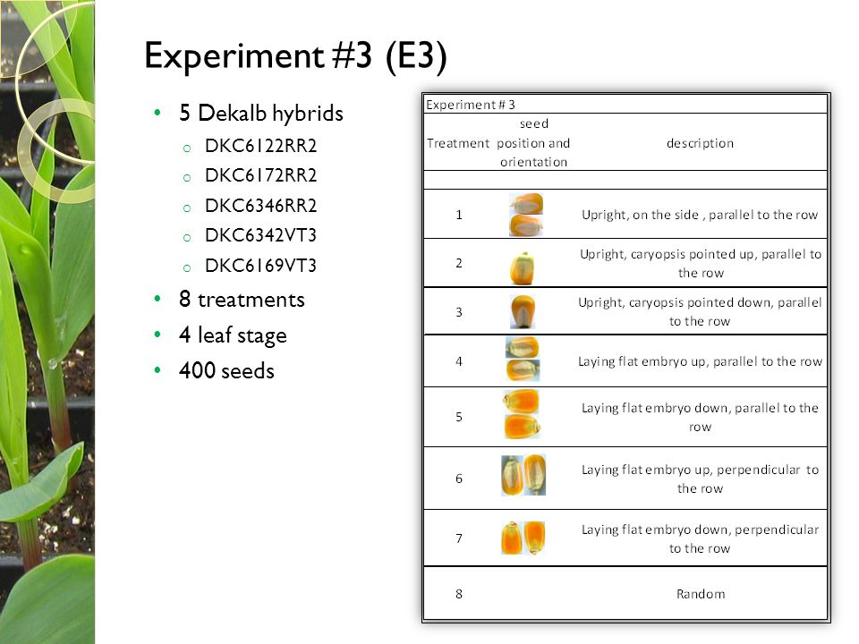 Experiment #3 (E3) 5 Dekalb hybrids 8 treatments 4 leaf stage