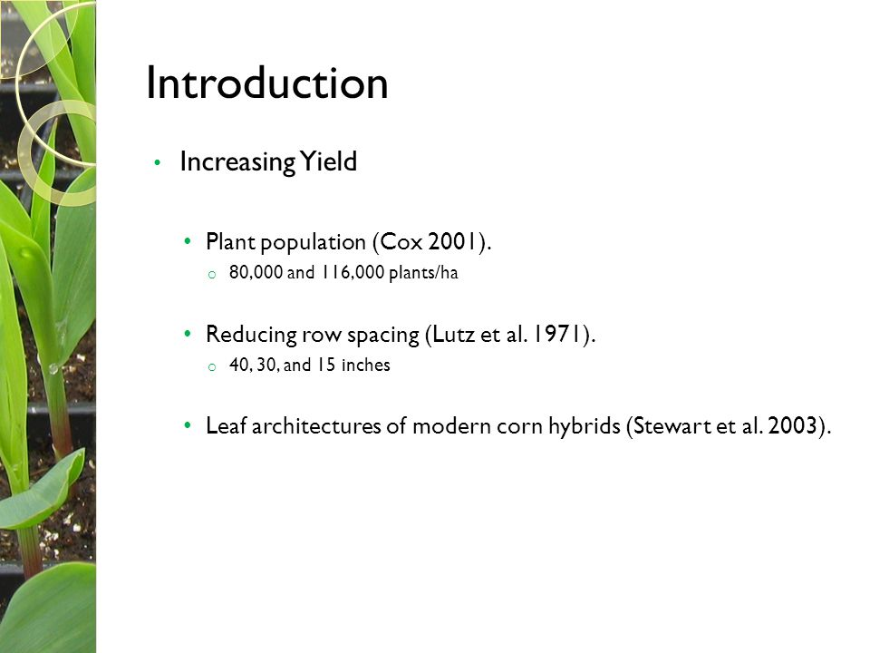 Introduction Increasing Yield Plant population (Cox 2001).
