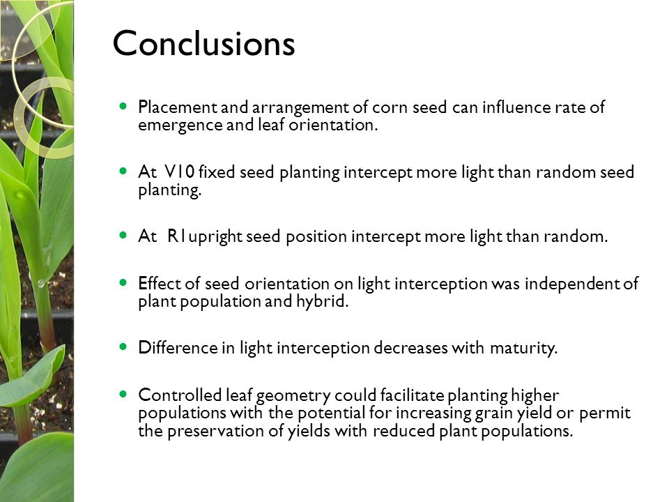 Conclusions Placement and arrangement of corn seed can influence rate of emergence and leaf orientation.