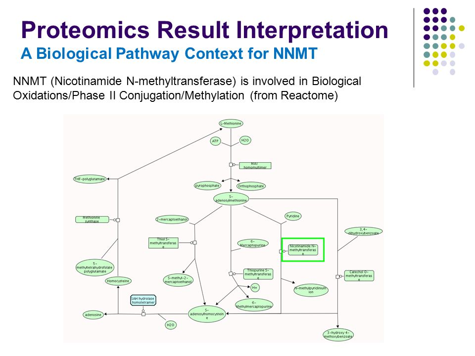 Proteomics Result Interpretation A Biological Pathway Context for NNMT