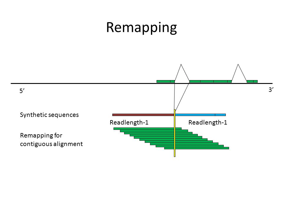 Remapping Synthetic sequences Readlength-1 Readlength-1