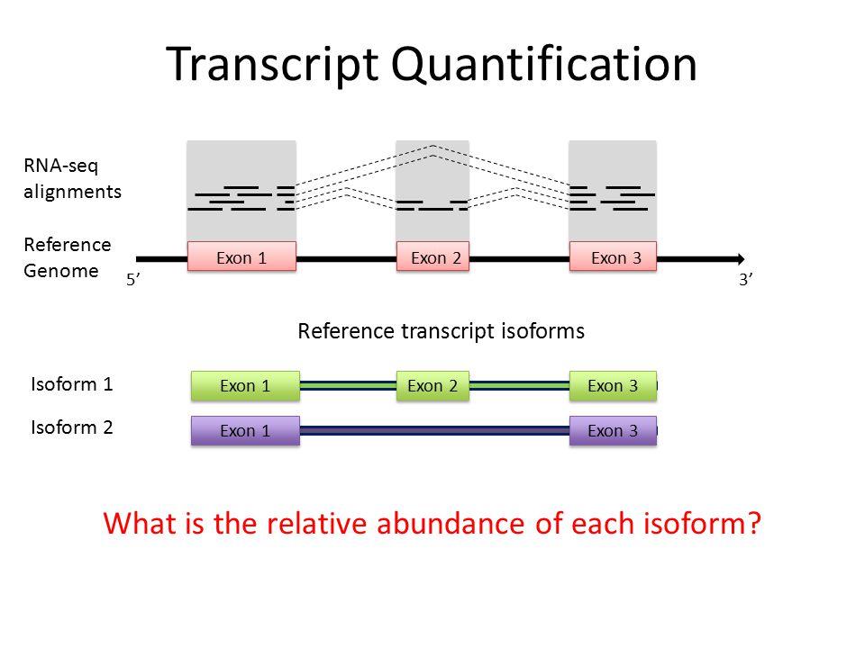 Transcript Quantification