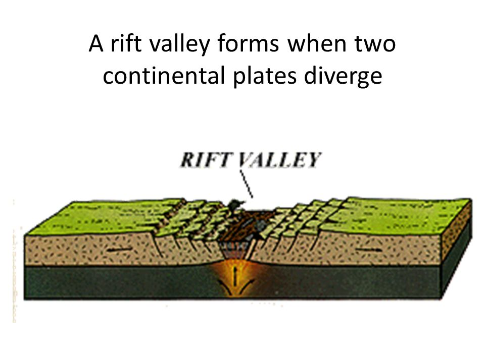 A rift valley forms when two continental plates diverge