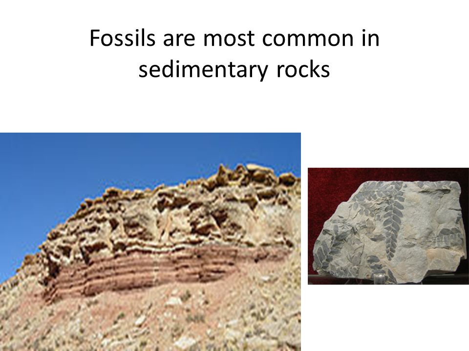 Fossils are most common in sedimentary rocks