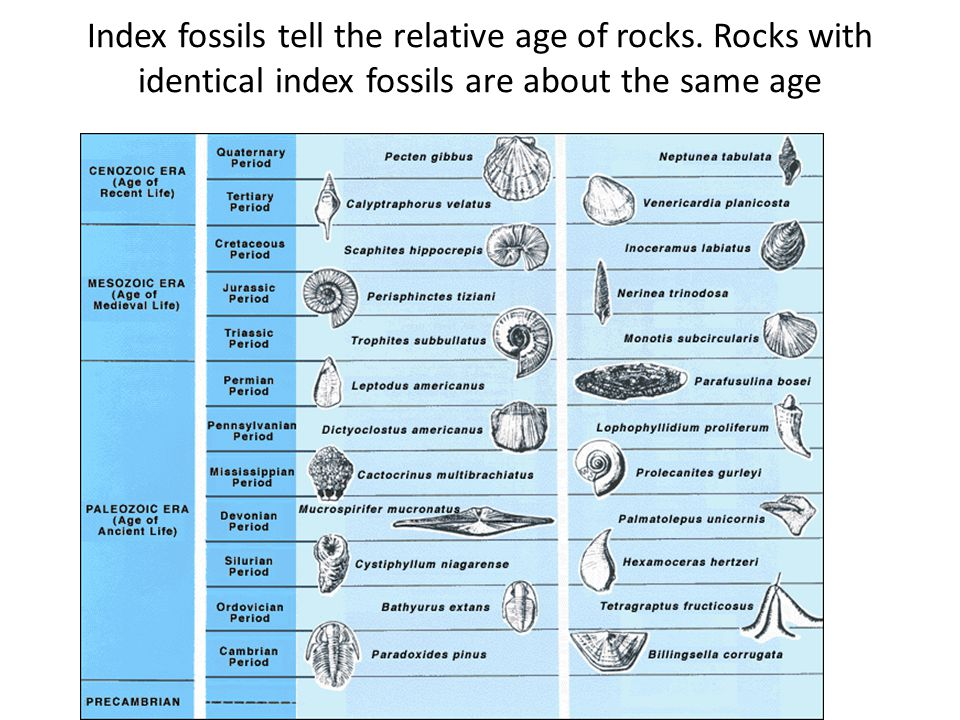 Index fossils tell the relative age of rocks