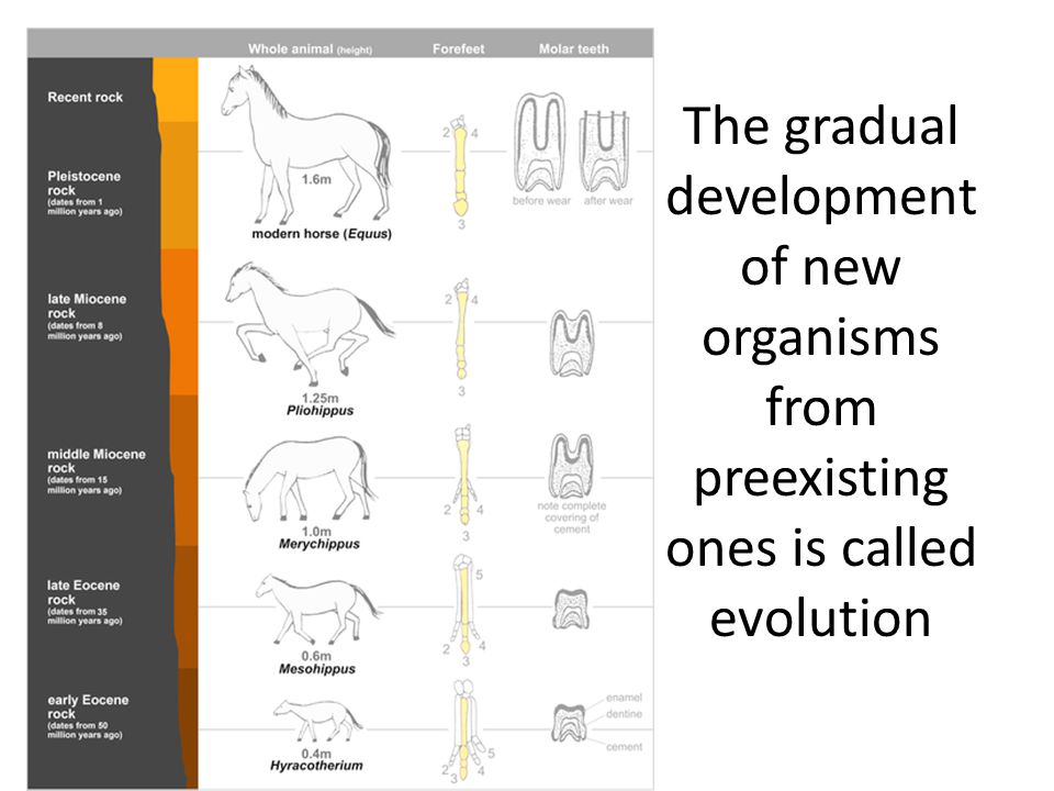 The gradual development of new organisms from preexisting ones is called evolution