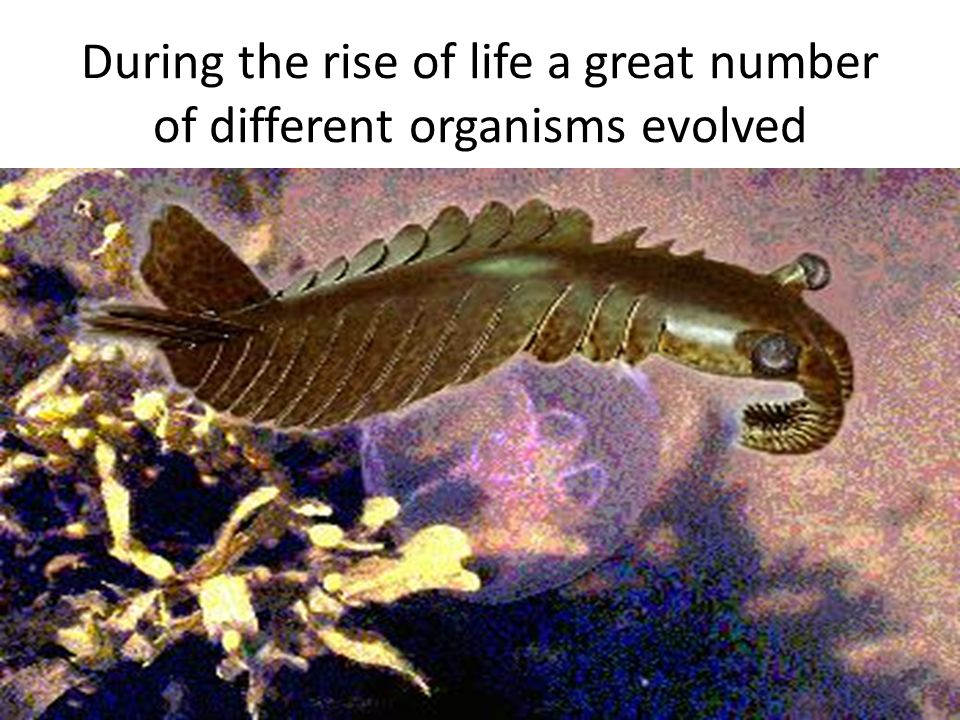 During the rise of life a great number of different organisms evolved