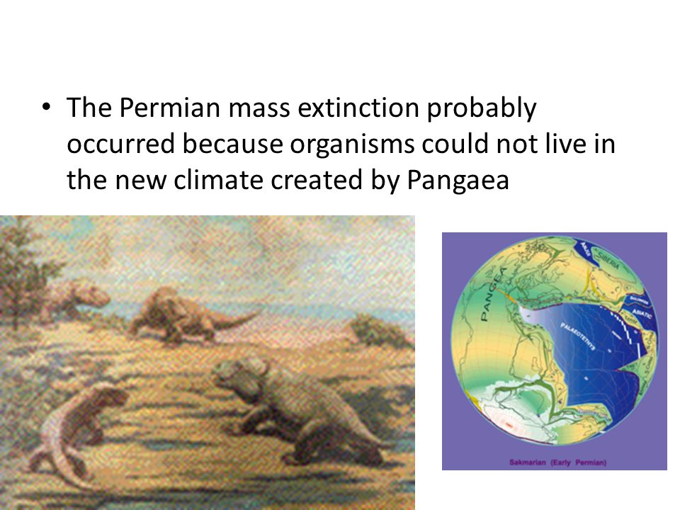 The Permian mass extinction probably occurred because organisms could not live in the new climate created by Pangaea