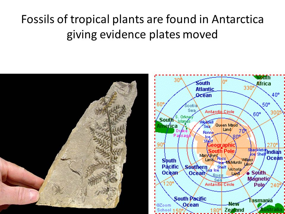 Fossils of tropical plants are found in Antarctica giving evidence plates moved