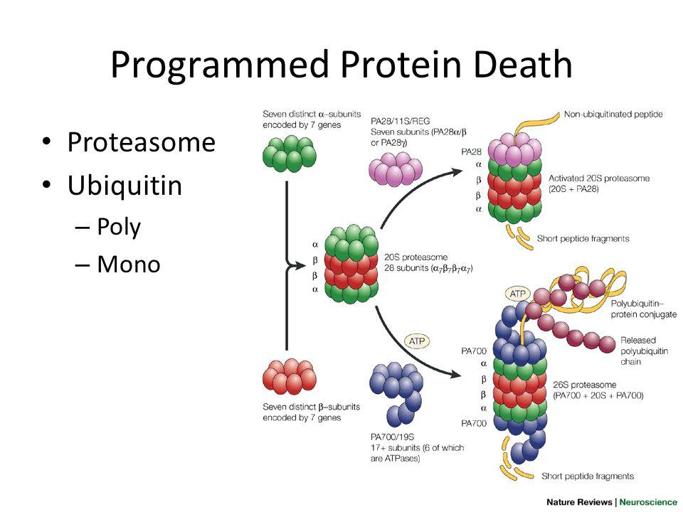 Programmed Protein Death