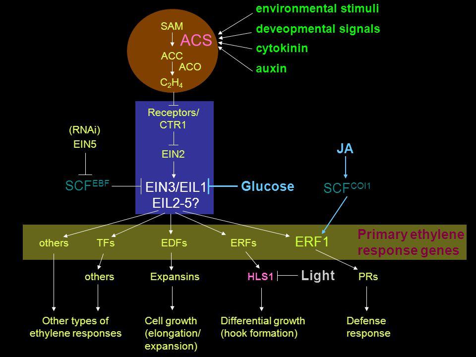 ACS JA SCFEBF EIN3/EIL1 Glucose SCFCOI1 EIL2-5 Primary ethylene ERF1