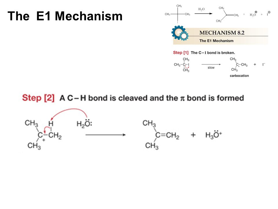 The E1 Mechanism