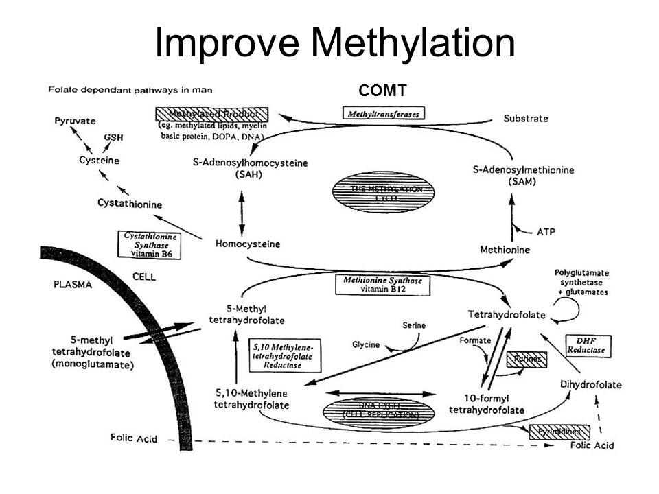 Improve Methylation COMT