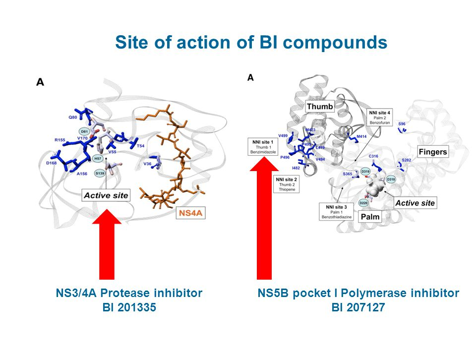 Site of action of BI compounds