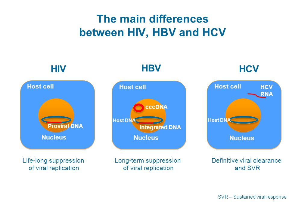 The main differences between HIV, HBV and HCV