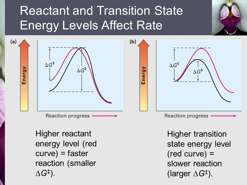 Reactant and Transition State Energy Levels Affect Rate