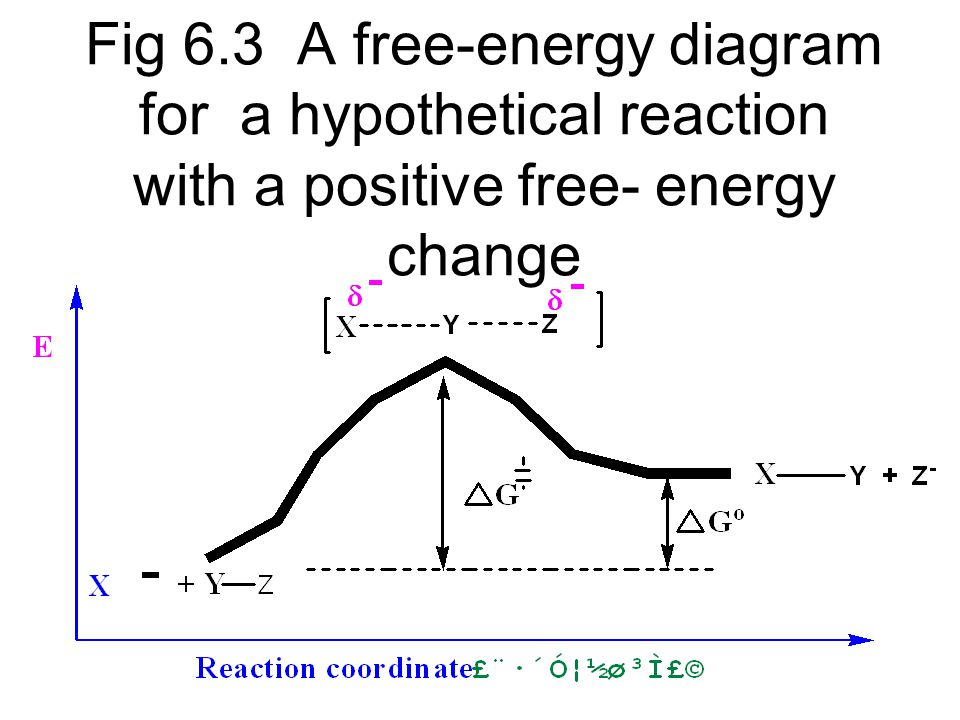 Fig 6.3 A free-energy diagram for a hypothetical reaction with a positive free- energy change