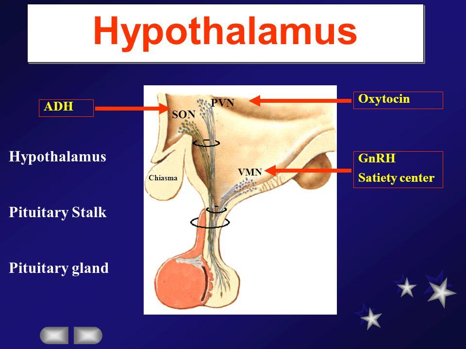 Hypothalamus Hypothalamus Pituitary Stalk Pituitary gland Oxytocin ADH