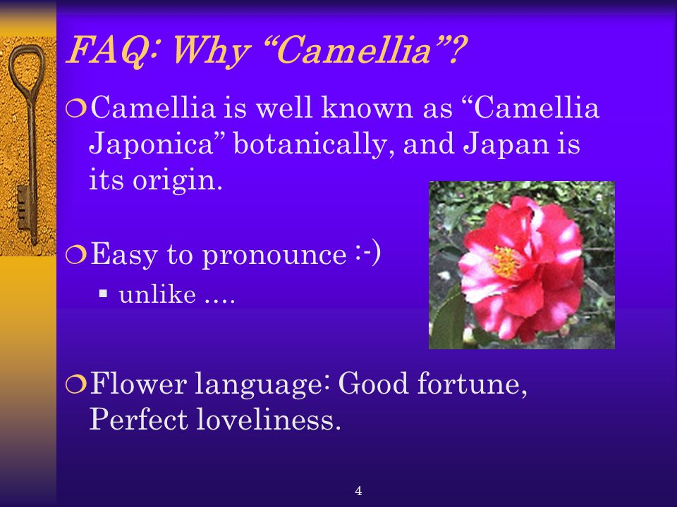 FAQ: Why Camellia Camellia is well known as Camellia Japonica botanically, and Japan is its origin.