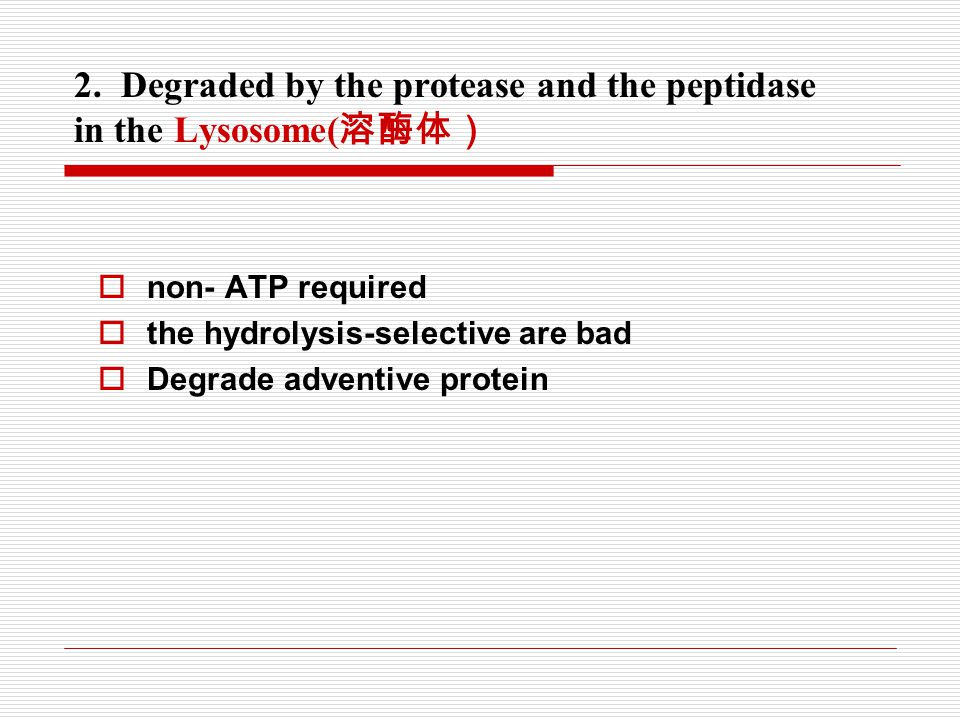 2. Degraded by the protease and the peptidase in the Lysosome(溶酶体)