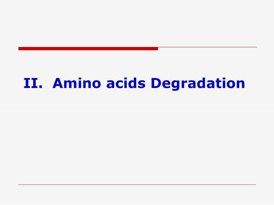 II. Amino acids Degradation