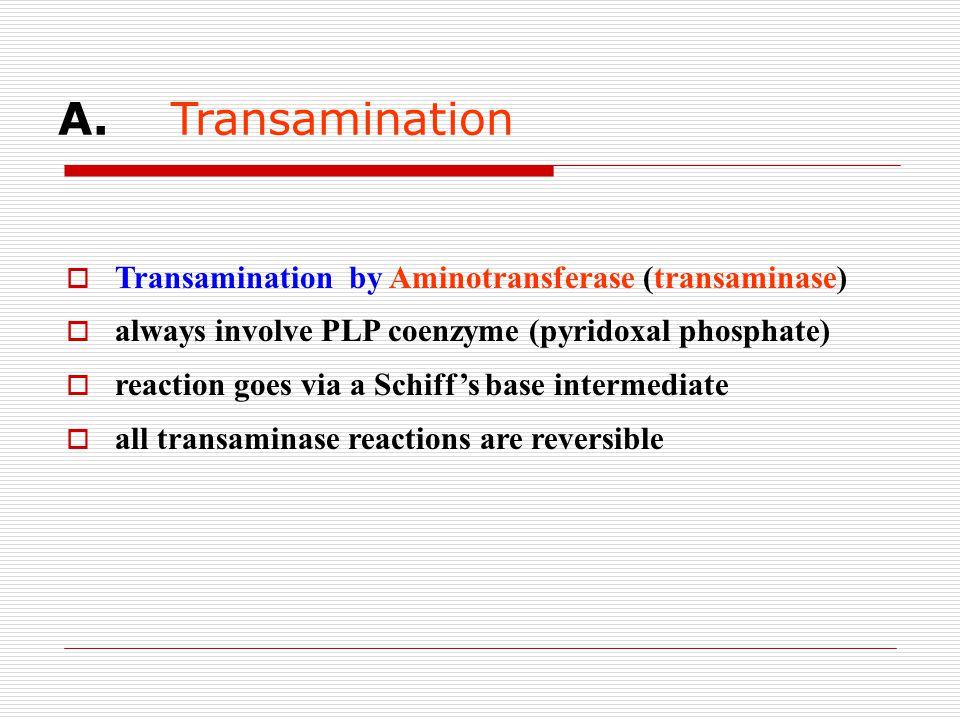 A. Transamination Transamination by Aminotransferase (transaminase)