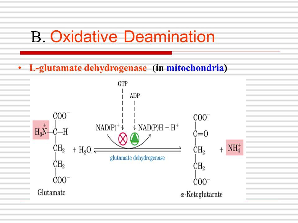 B. Oxidative Deamination