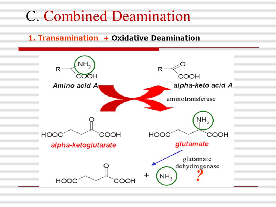 C. Combined Deamination
