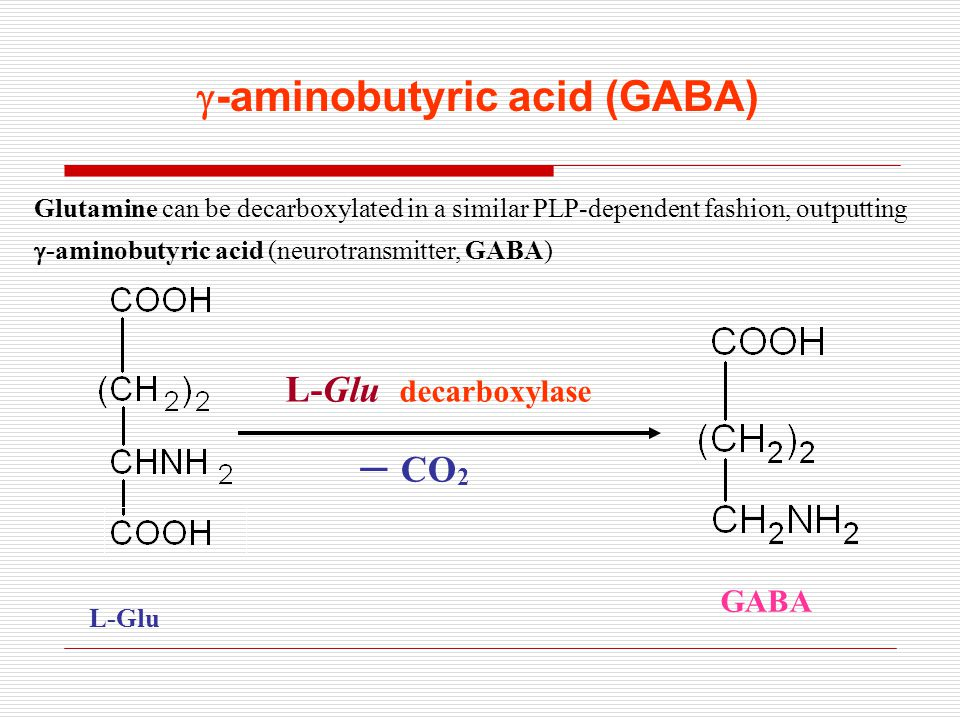 -aminobutyric acid (GABA)