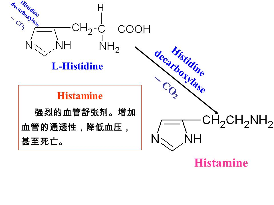 Histidine decarboxylase