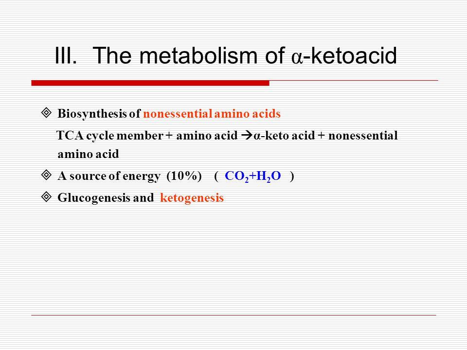 III. The metabolism of α-ketoacid