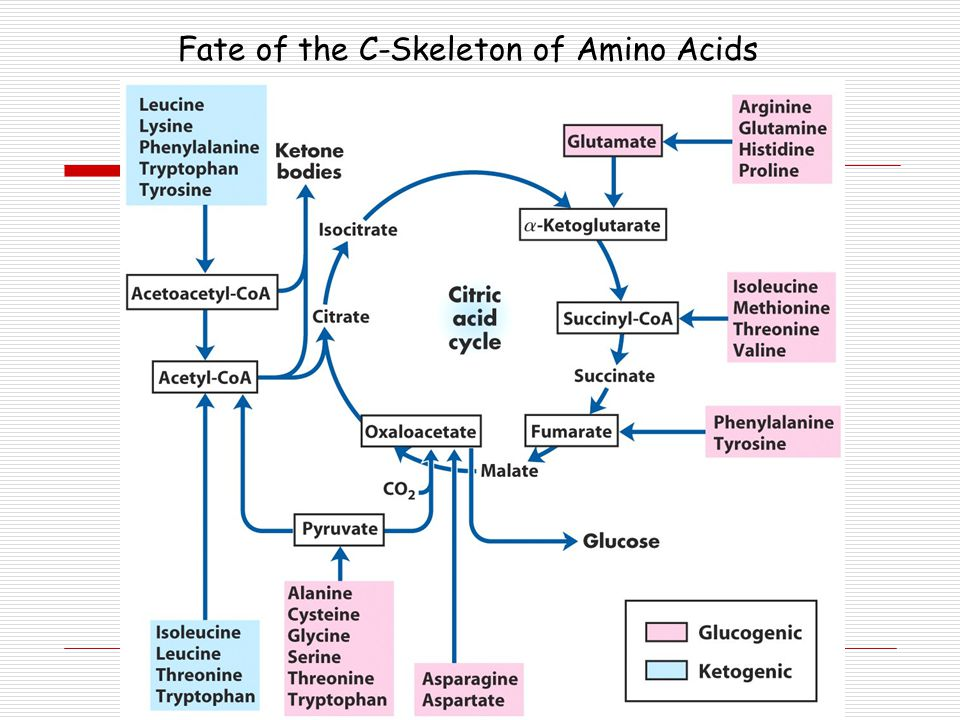Fate of the C-Skeleton of Amino Acids