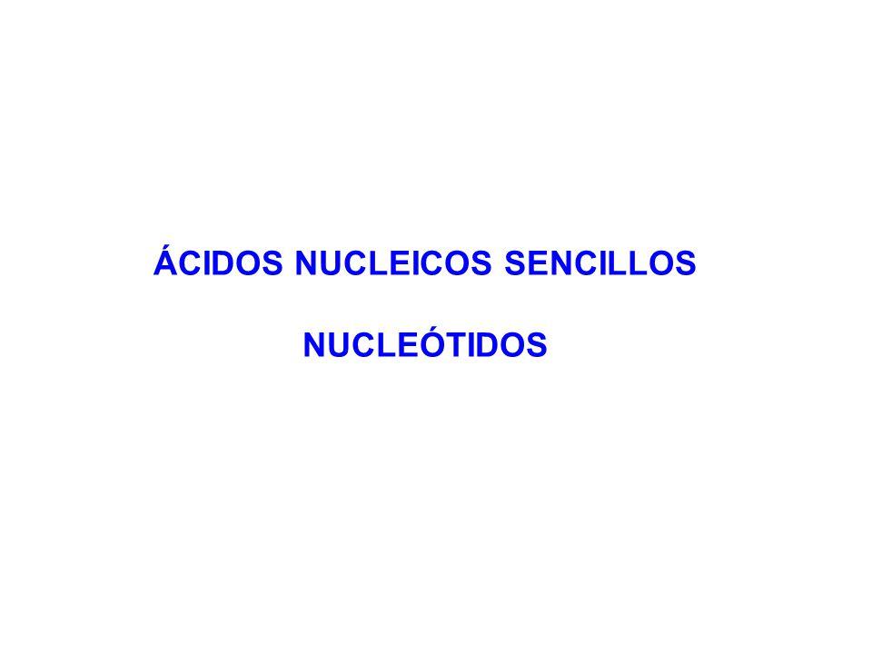 ÁCIDOS NUCLEICOS SENCILLOS