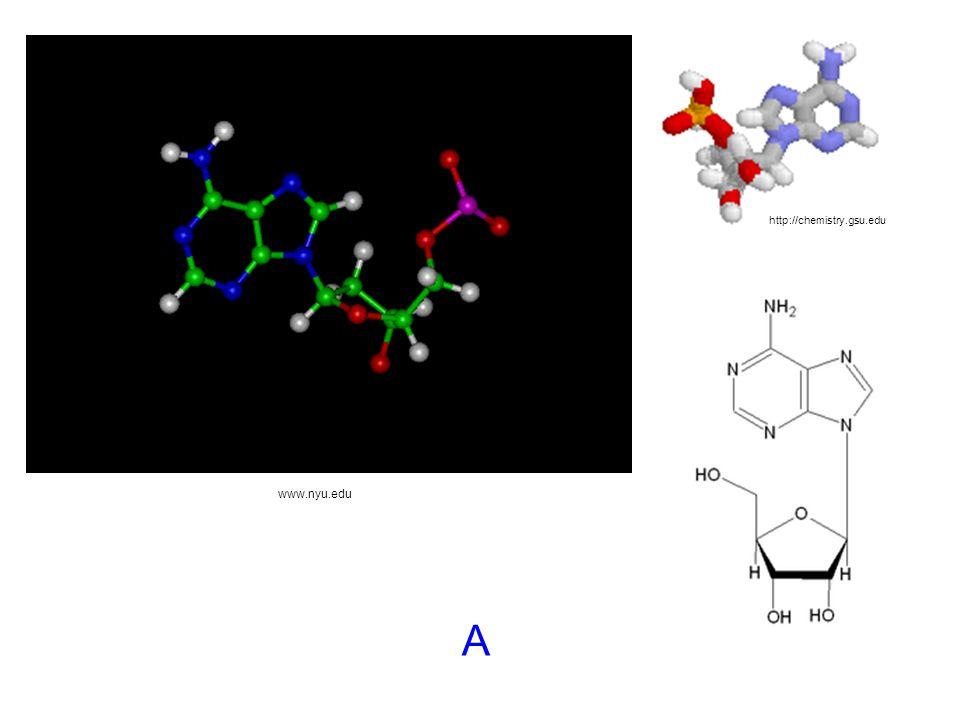 http://chemistry.gsu.edu www.nyu.edu A