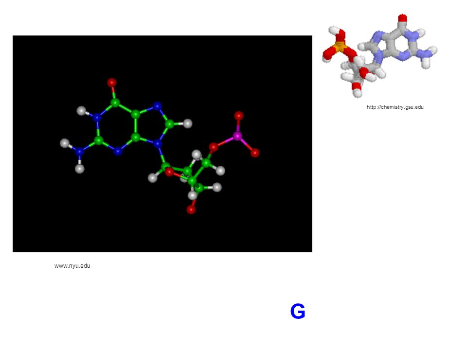 http://chemistry.gsu.edu www.nyu.edu G