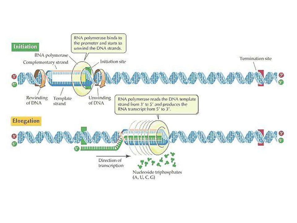 http://universe-review.ca/I11-21-mRNA1.jpg