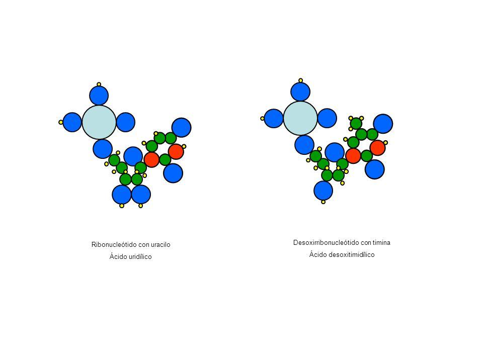 Ribonucleótido con uracilo Ácido uridílico