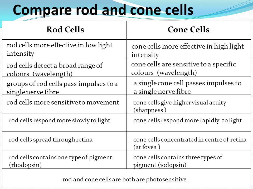 Compare rod and cone cells