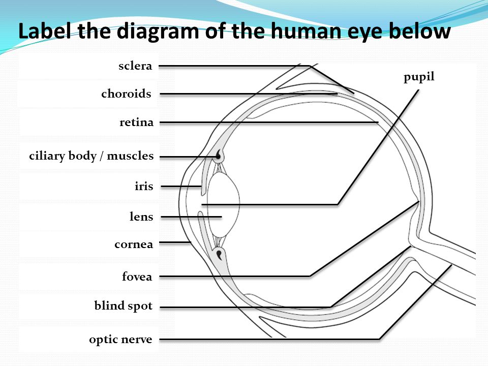 Label the diagram of the human eye below